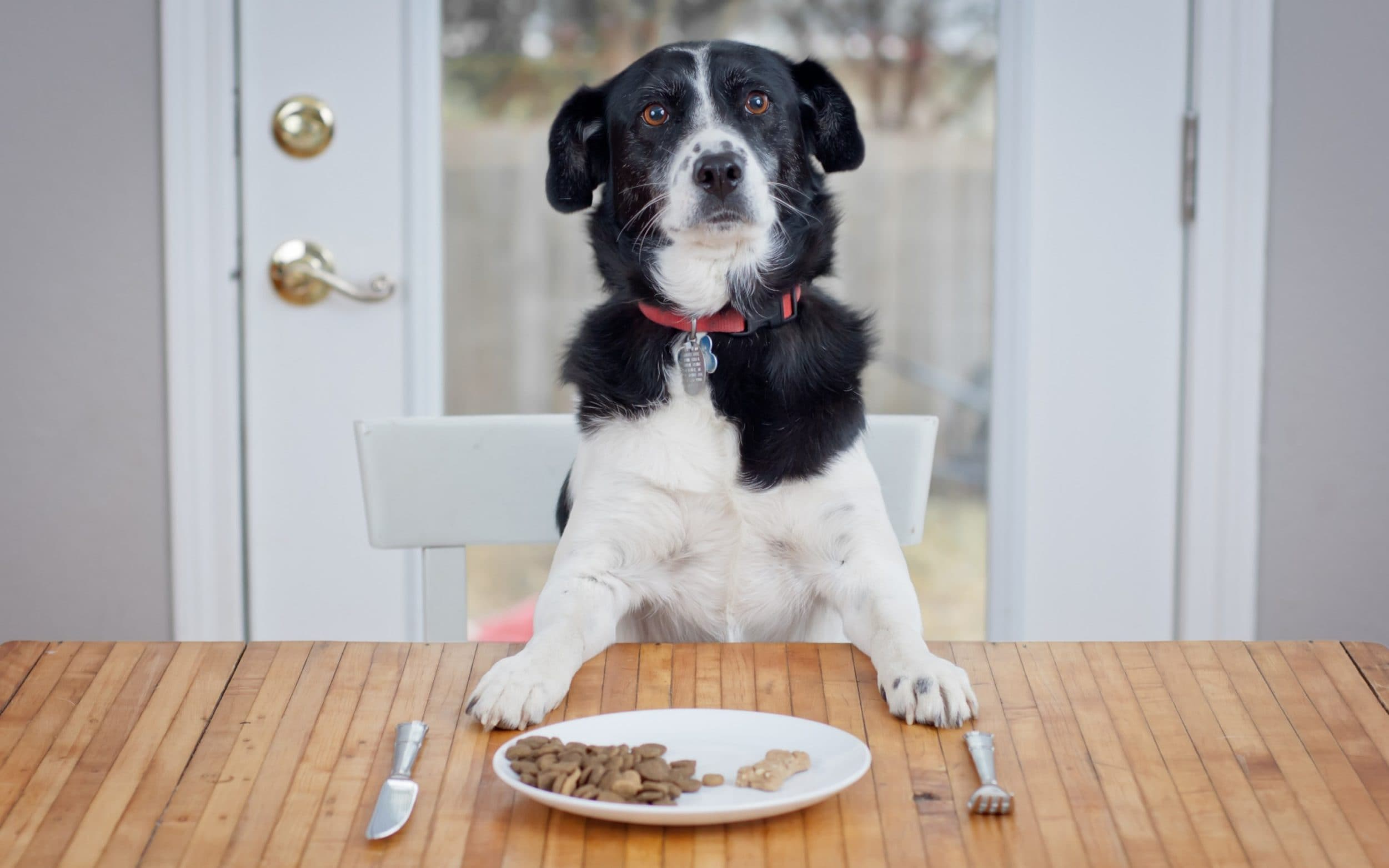 Foods for Your Dog